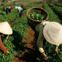 workers filling baskets in field